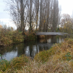 Union Slough, on the University of Washington campus, is the outlet of Ravenna Creek.
