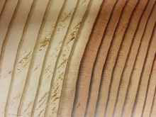 Close up view of the tree ring